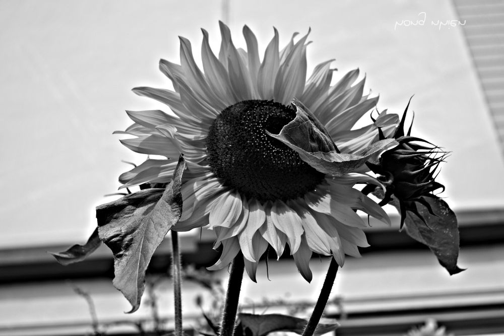 PicsArt_1377797972996 by nhiendo129