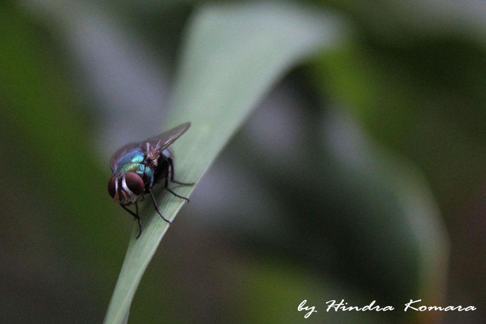 IMG_5049 by Hindra Komara