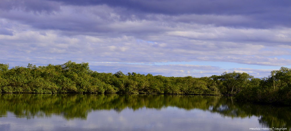 Very beautiful river in the interior a mangrove ... by Maum