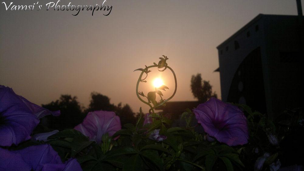 catch the sun by Vamsi Patil