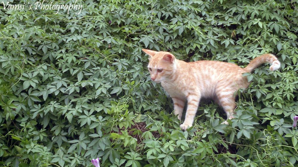My Cat by Vamsi Patil