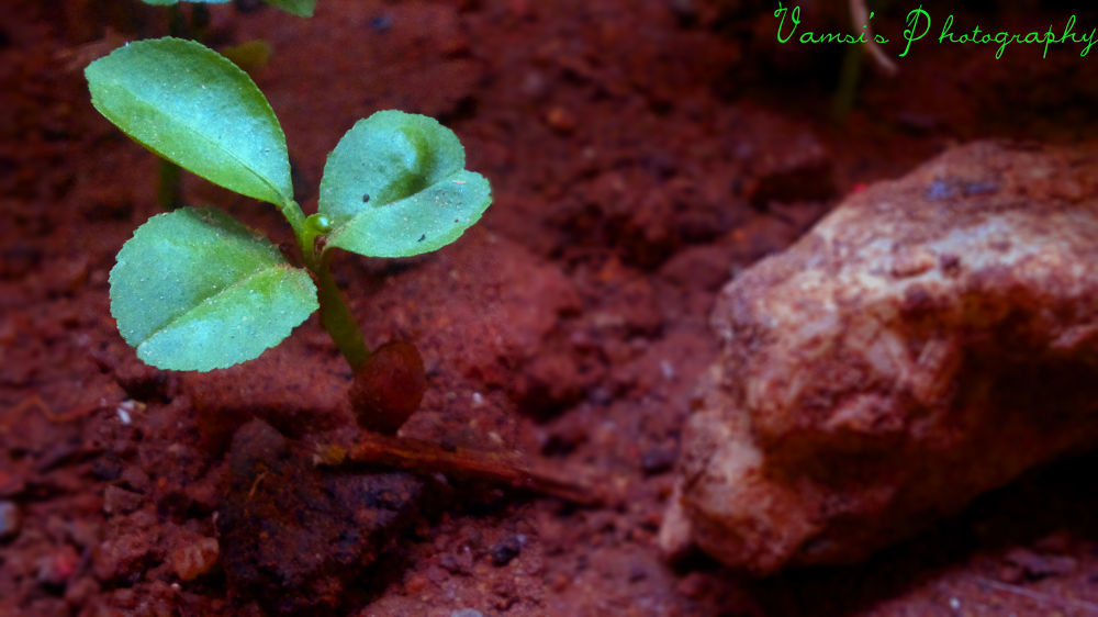 Do Plantation by Vamsi Patil