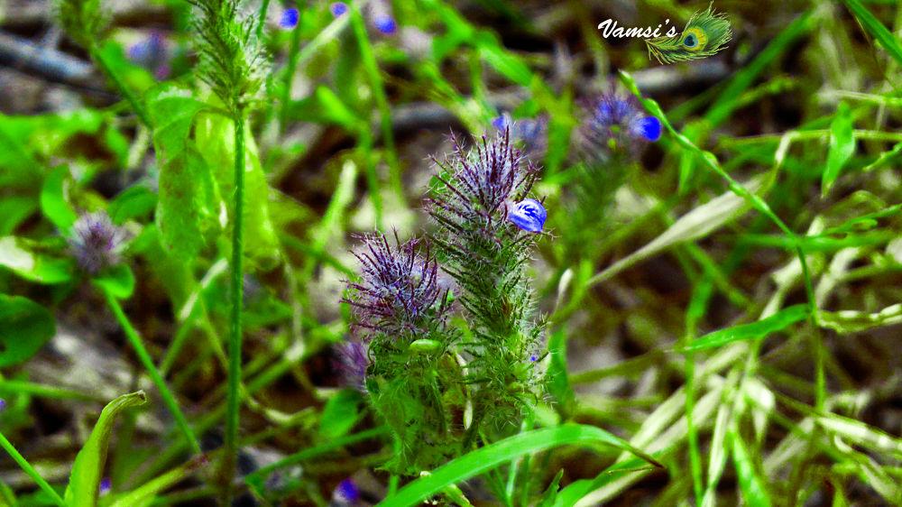 flowers by Vamsi Patil
