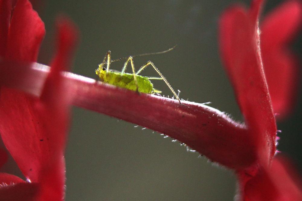 Insecto sobre pequeña flor by marittelazcano