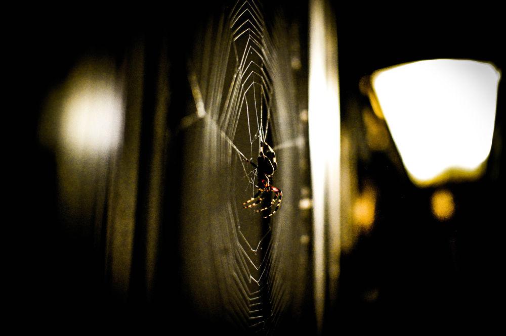 Photo in Random #spider #red #insect #web #bill #schuchman #photography #nikon