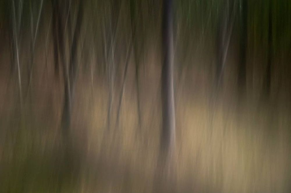 Photo in Fine Art #icm #woodland #dry forest #blur #brian aston #trees #fine art #green #artt #youpic2013 #ypa2013