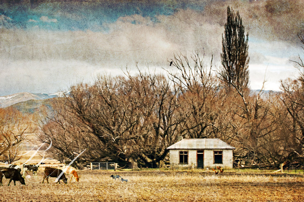Photo in Fine Art #cows #cattle #dog #choocks #chickens #chicken #crow #snow #mountains #tree #fine #art #brian aston #nikon #farm #house #shack #ruin #old house #old #texture #composite