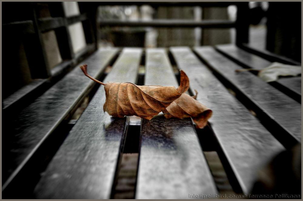 Fall by Terrence Pellikaan