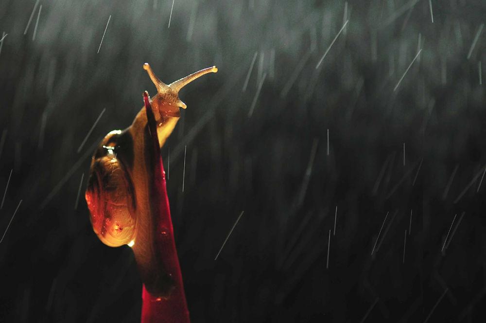 Rainy Day by vandie