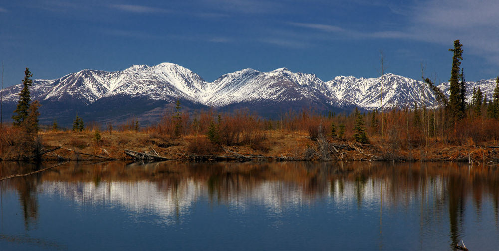 Touch of Snow by Pamswildimages