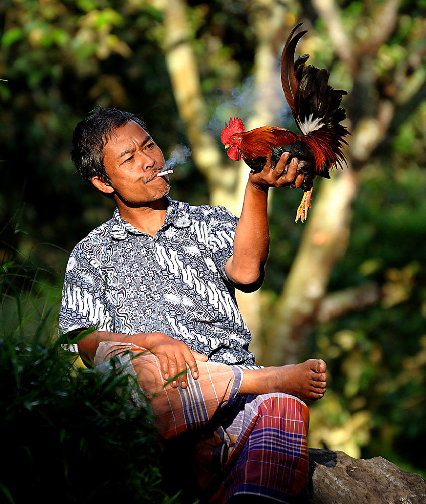 man and the rooster by martin marthadinata