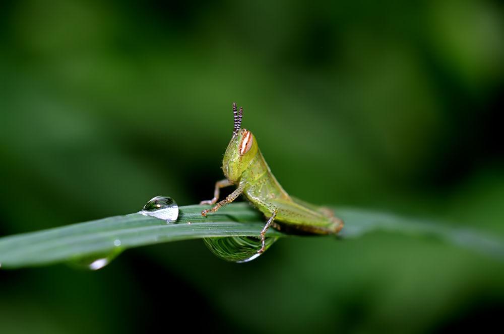 grasshoper by martin marthadinata