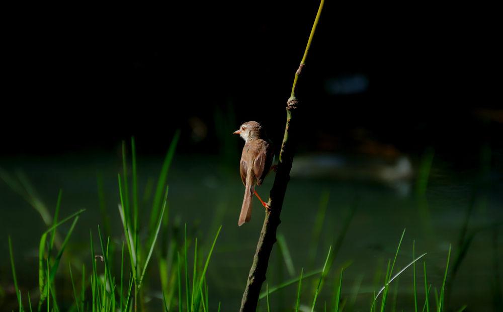 Photo in Animal #bird #animal #wild