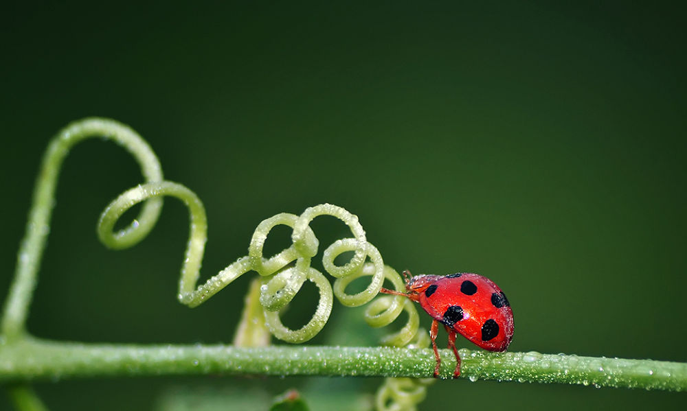 Red Bug Never Give Up by gunsvector66
