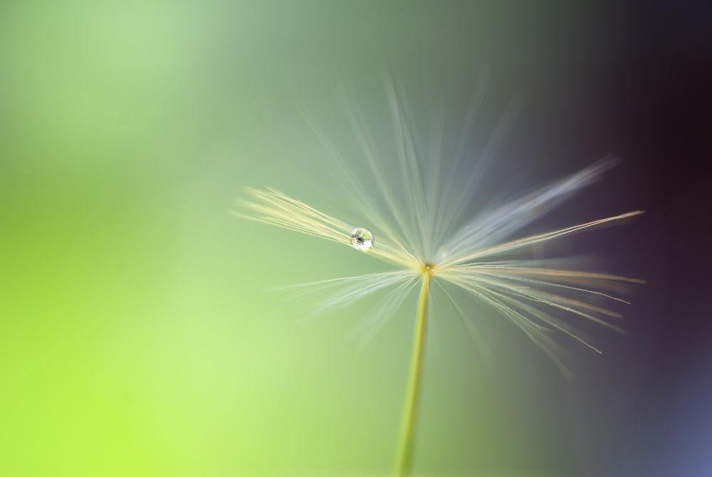 Alone. by Annette Nielsen