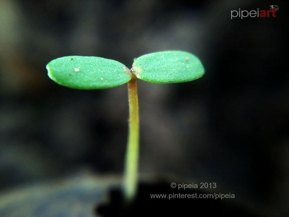 plant by ipeins
