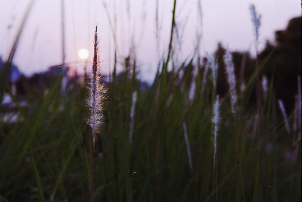 Photo in Landscape #grass #sun #contre-soleil #nikon #nikon f100 #af-d 24-85mm f/2.8-4 micro #kodak proimage 100.
