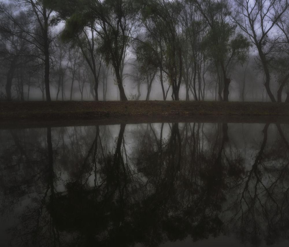 Foggy morning by fodorpetya