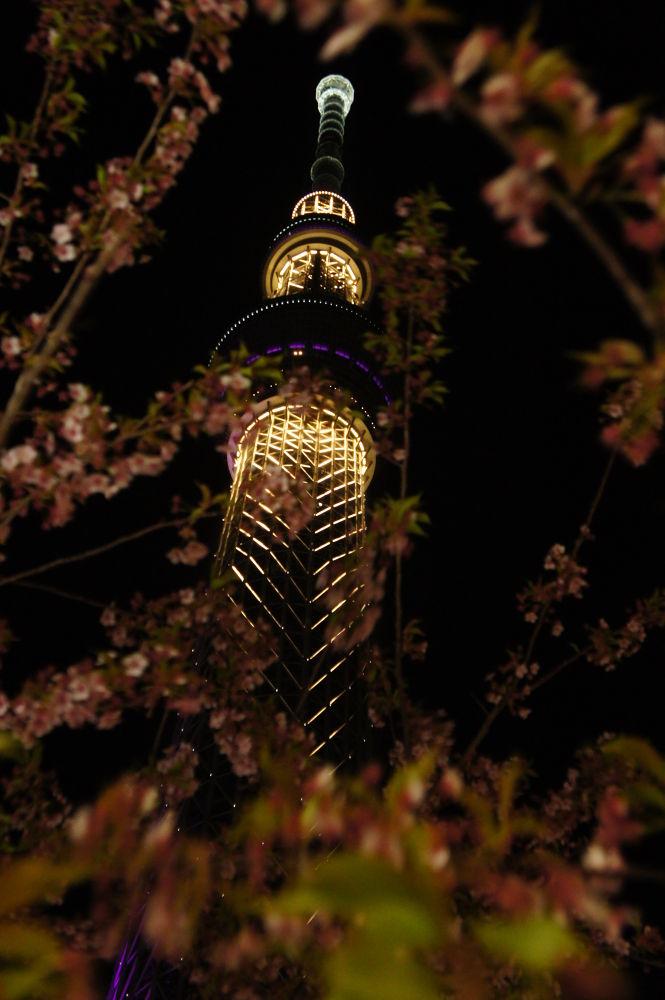 Skytree, Tokyo, JP  by danniyang
