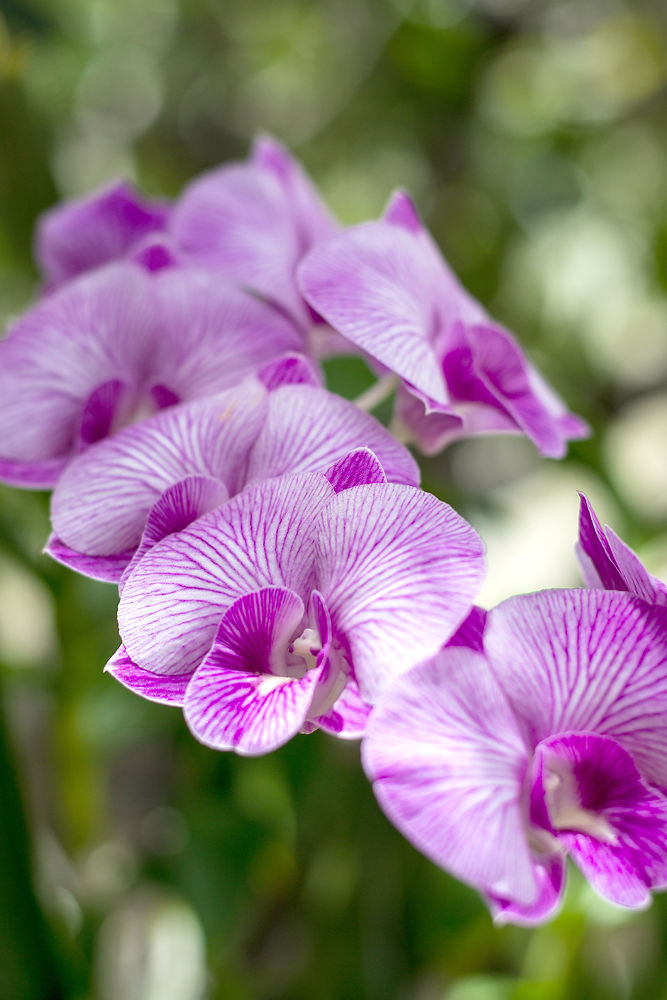 Orchids by Sarawud PALAPAN