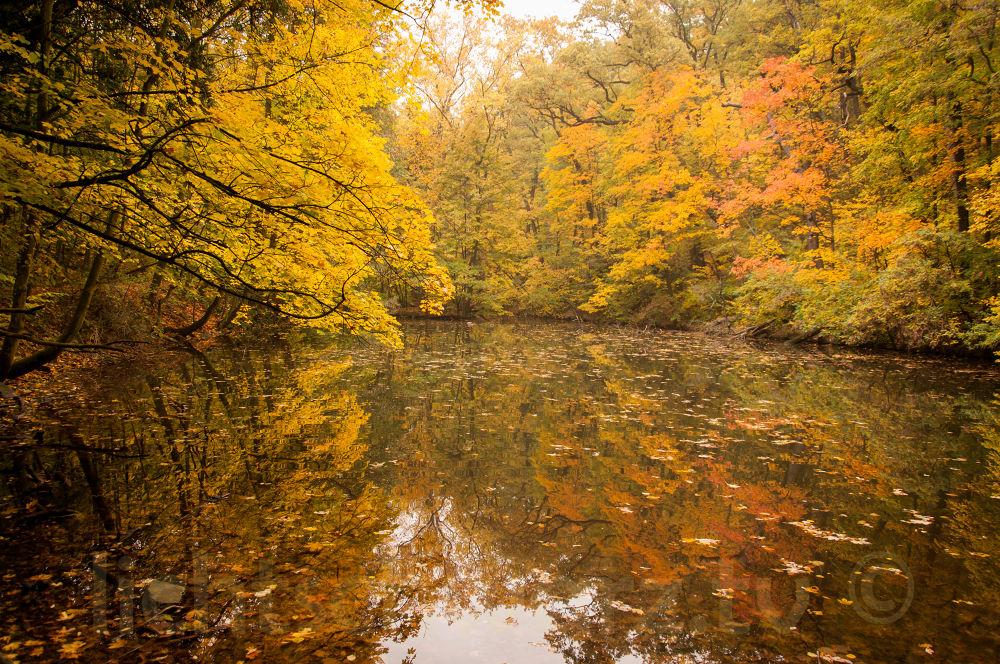 Autumn in vienna by Christian Schwarz