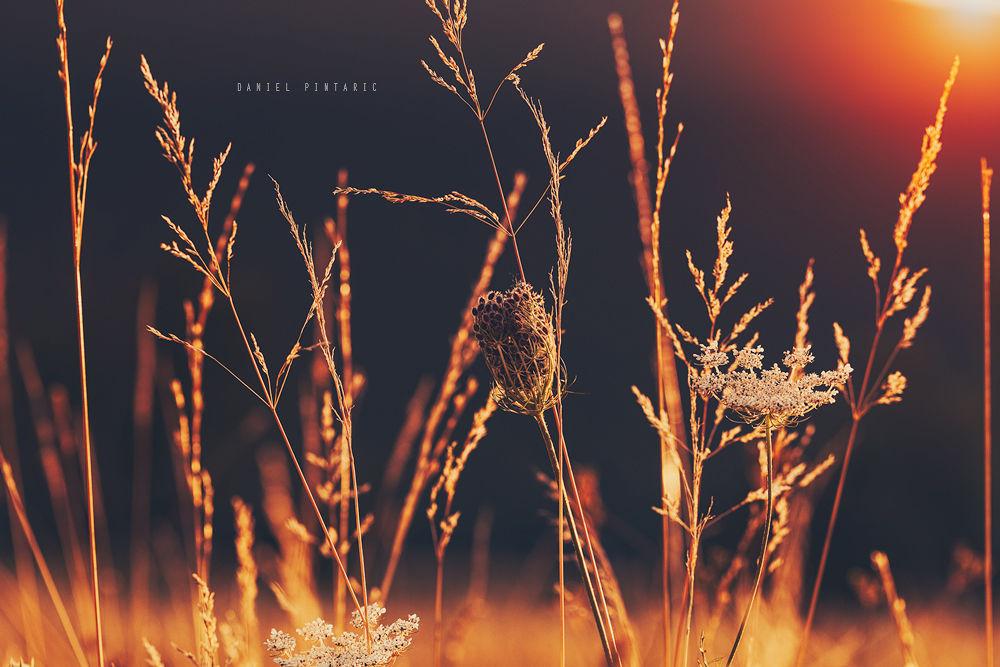 Burning Plants by DanielPintaric