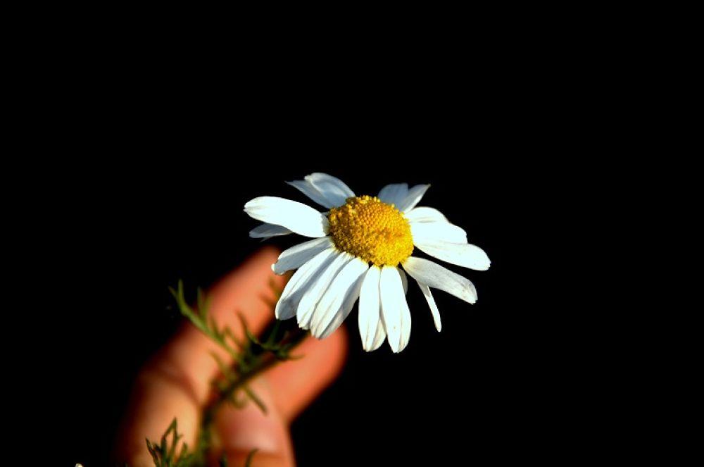 just flower by Anita Krecz