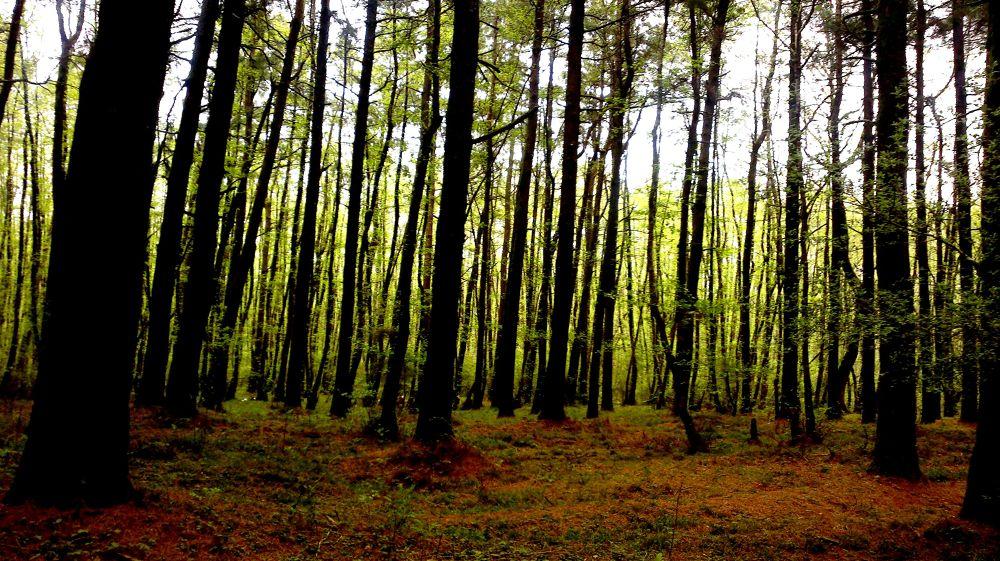 trees.... by matak