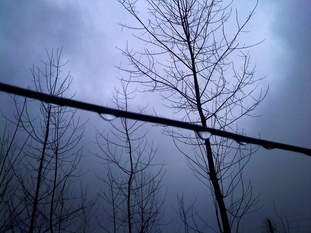 trees & drops by matak