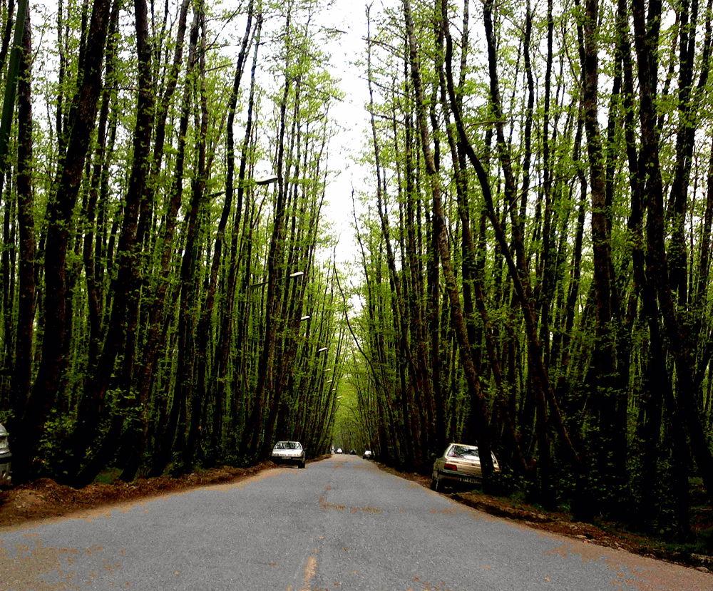 road by matak