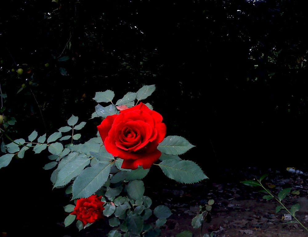 flower...3 by matak
