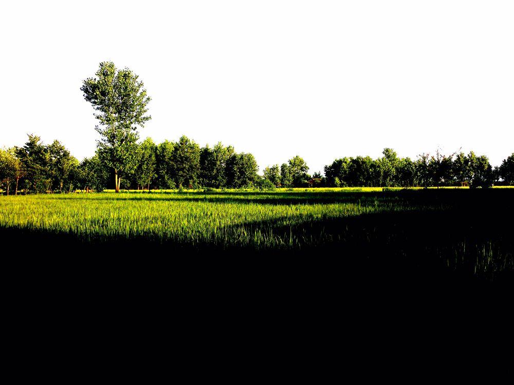 Photo in Landscape #tree #iran #gilan #matak