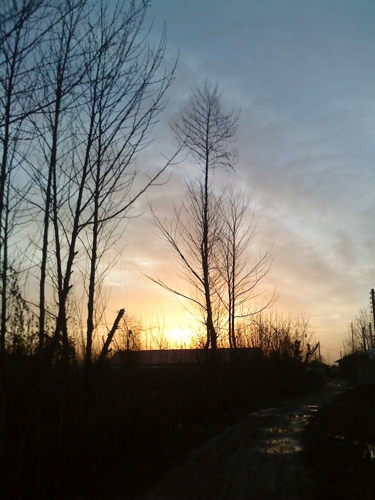 trees by matak