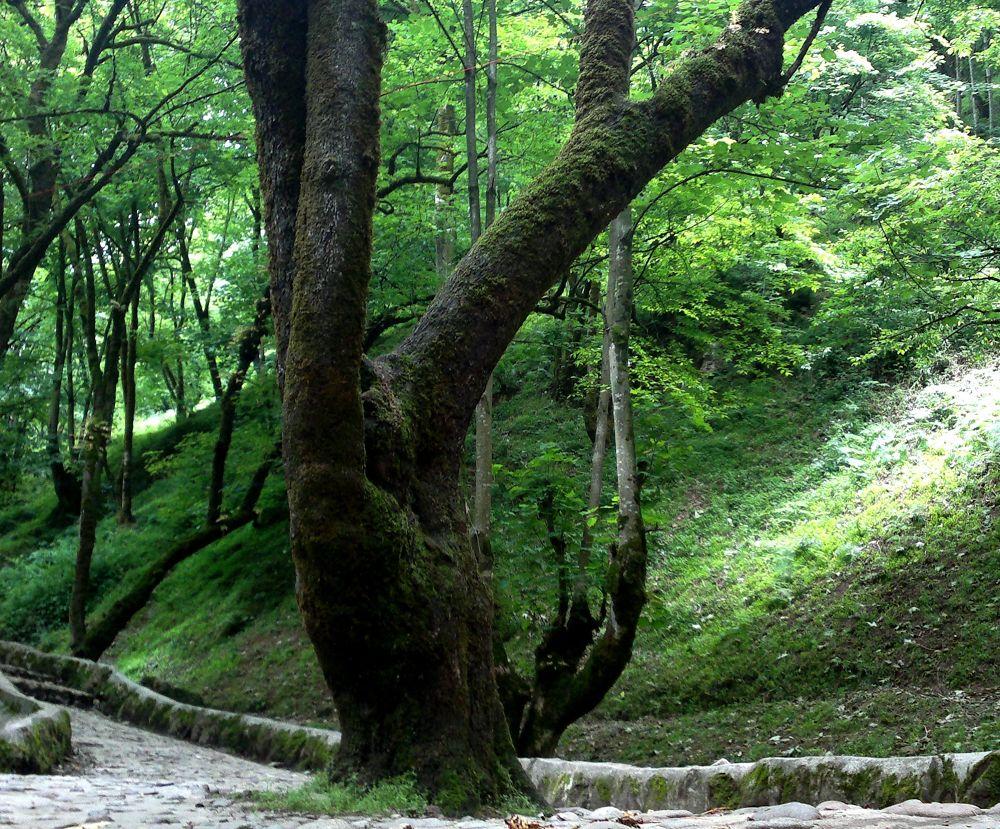 tree by matak