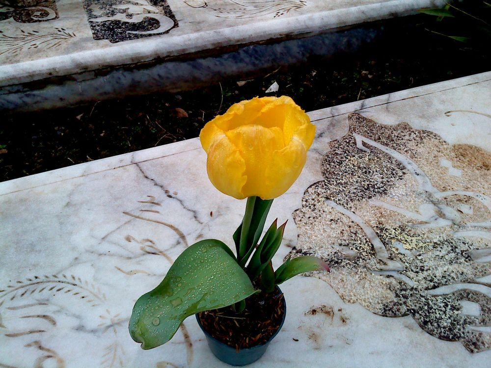 flower....19 by matak