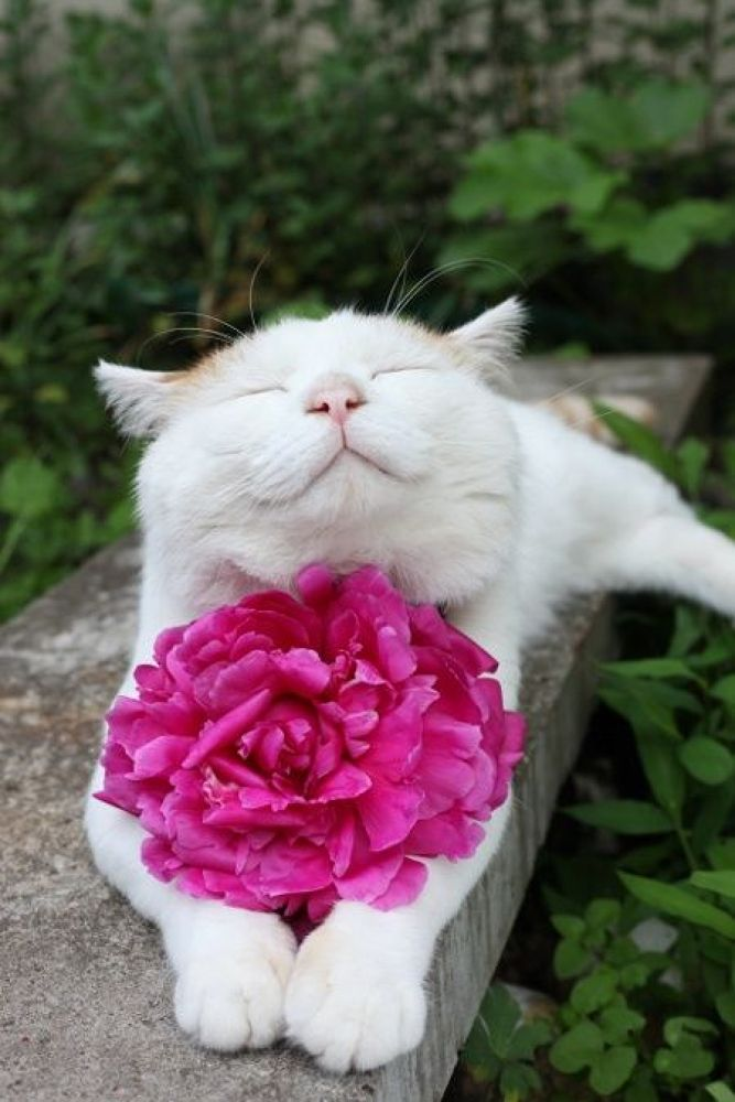 ~ Happy cat with a flower ~  by kathydavisusa