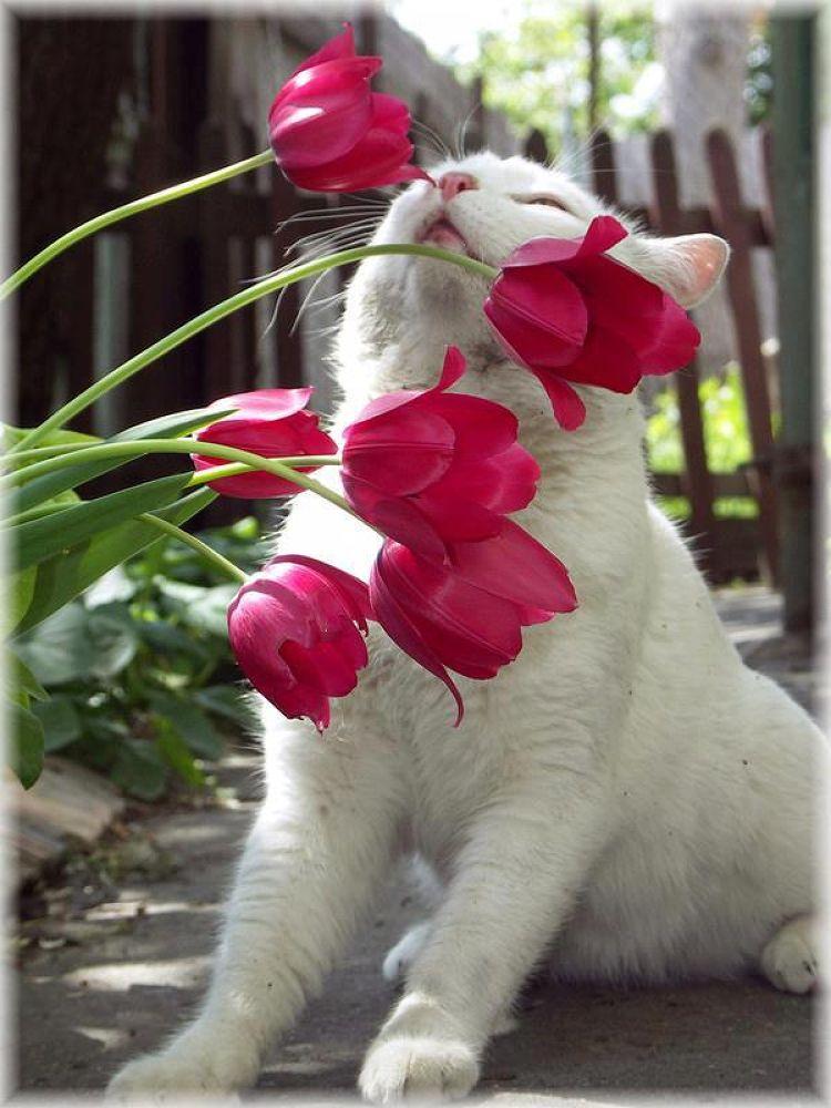 Smells pretty! <3 by kathydavisusa