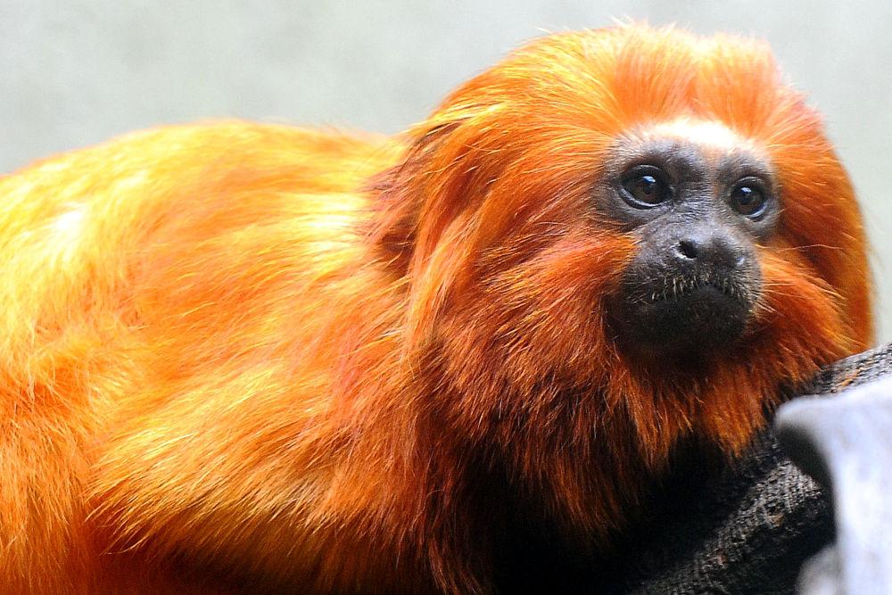 zoo - 2012 (94)e by fabio marcelo monteiro lopes