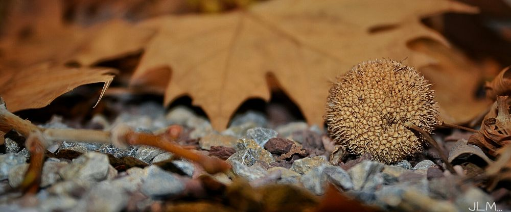hojas... by mayol egea