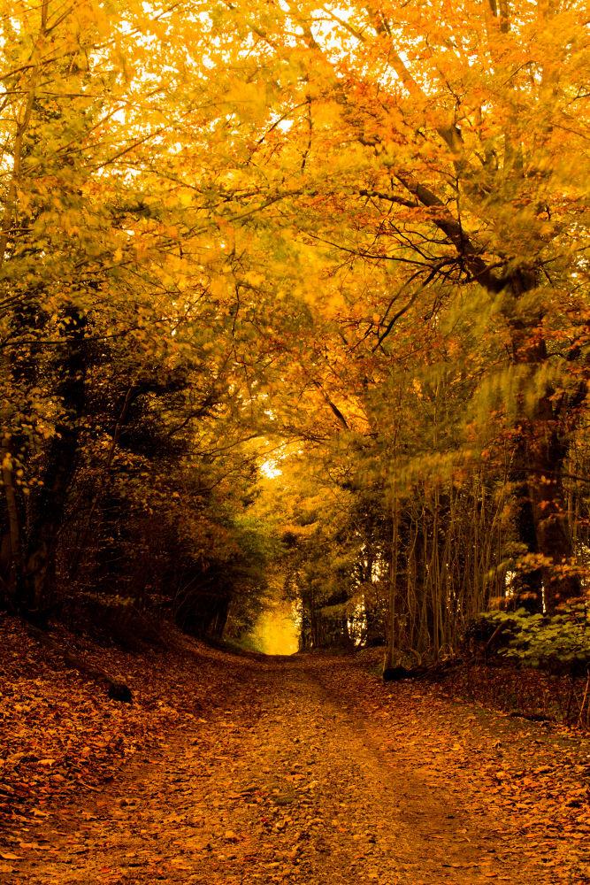 autumn 6 by jeff