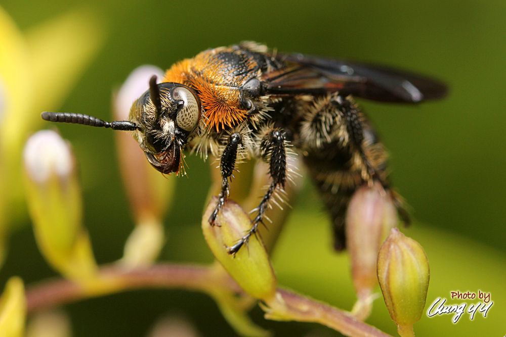 Bee 蜜蜂 by cyy4993