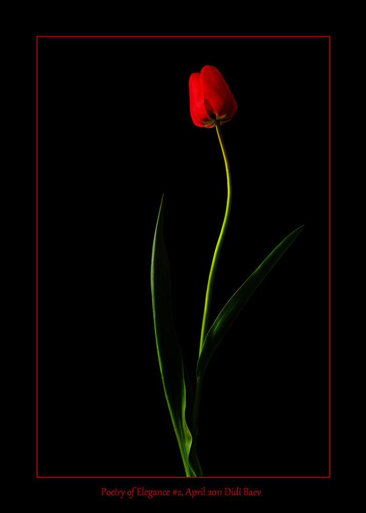 Poetry of Elegance #2 by didibaev