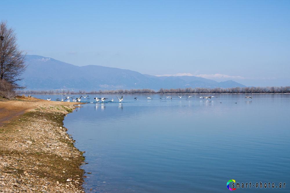 kerkini lake-4274 by vasiliskarapanagiotidis