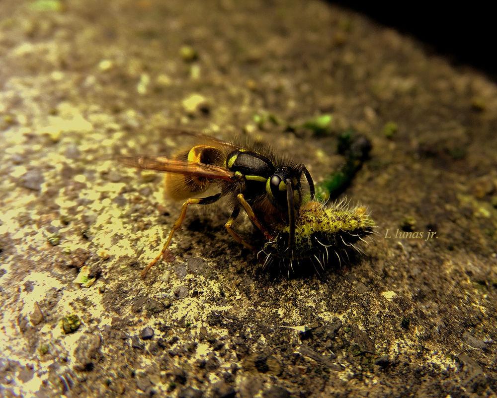 Predator in action by laurodonlunas