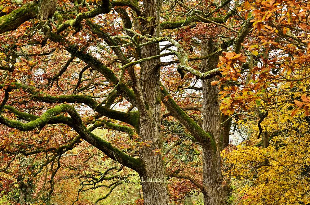 Autumn by laurodonlunas