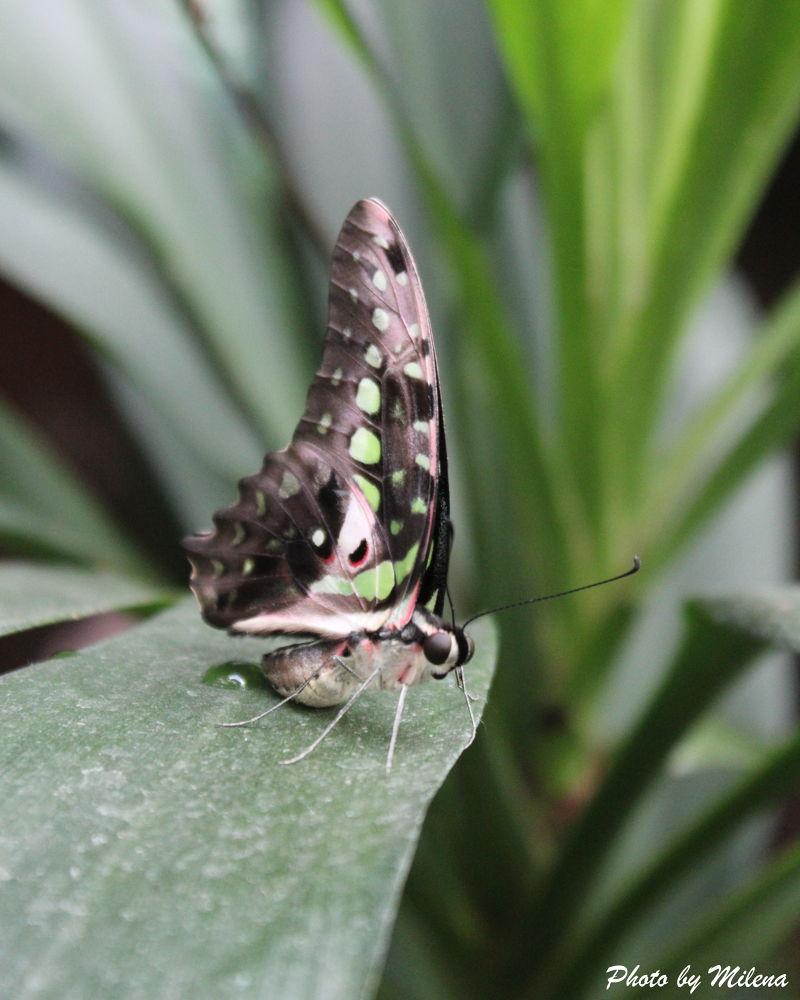 Butterfly by milena chorbadzhiyska