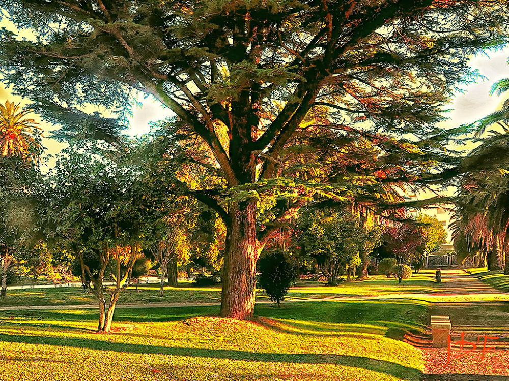 Parque by jesusdomenechfont9