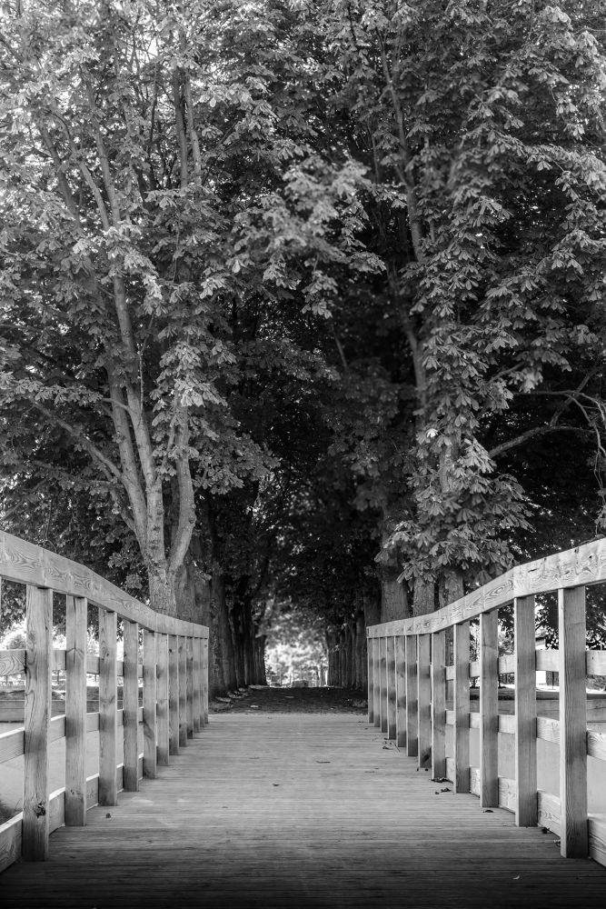 Forest by fotodorutimofte