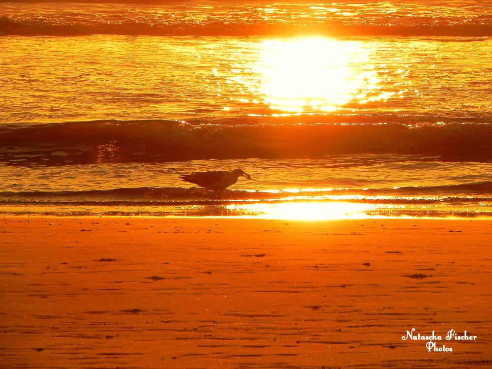 Möwe in Holland bei Sonnenuntergang by Natascha Fischer