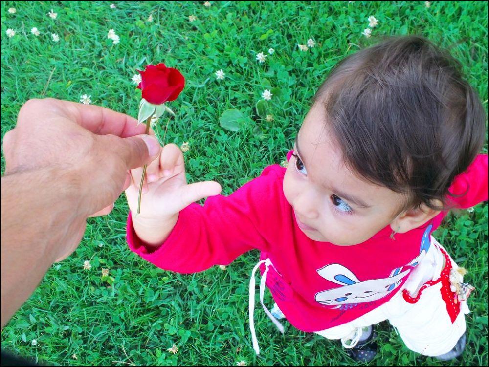 Gift by rezapasandideh